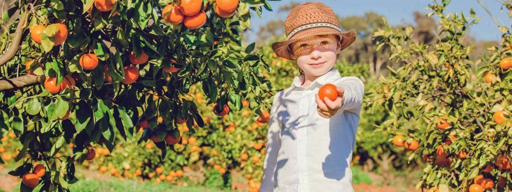 Frutas Planeta Alimentos
