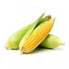 Milho Verde Planeta Alimentos